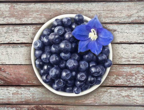 Bilberry: Not Just Another Blue Berry